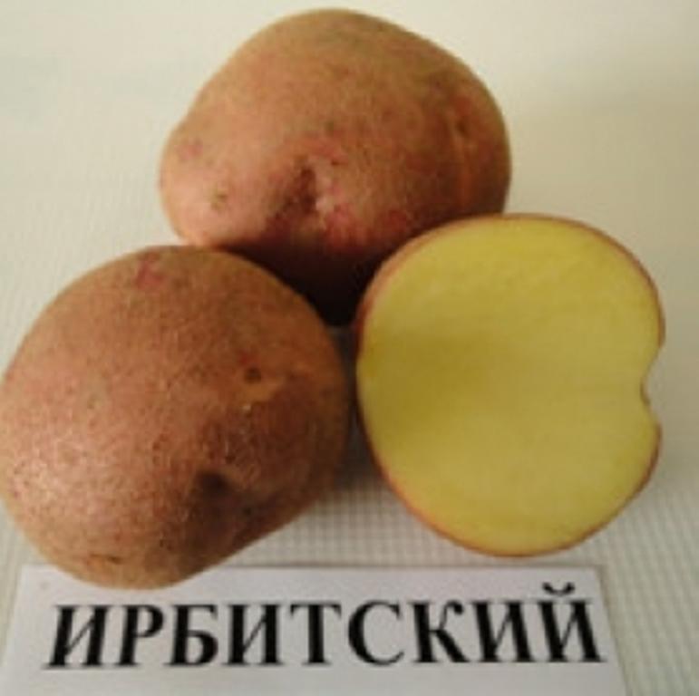 Картофель крепыш: отзывы, описание, характеристика, фото