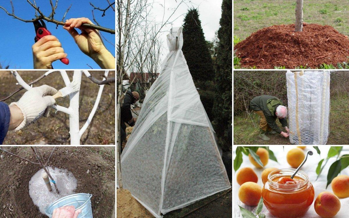 Уход за яблоней весной после зимы: советы садоводов - yabloki.site