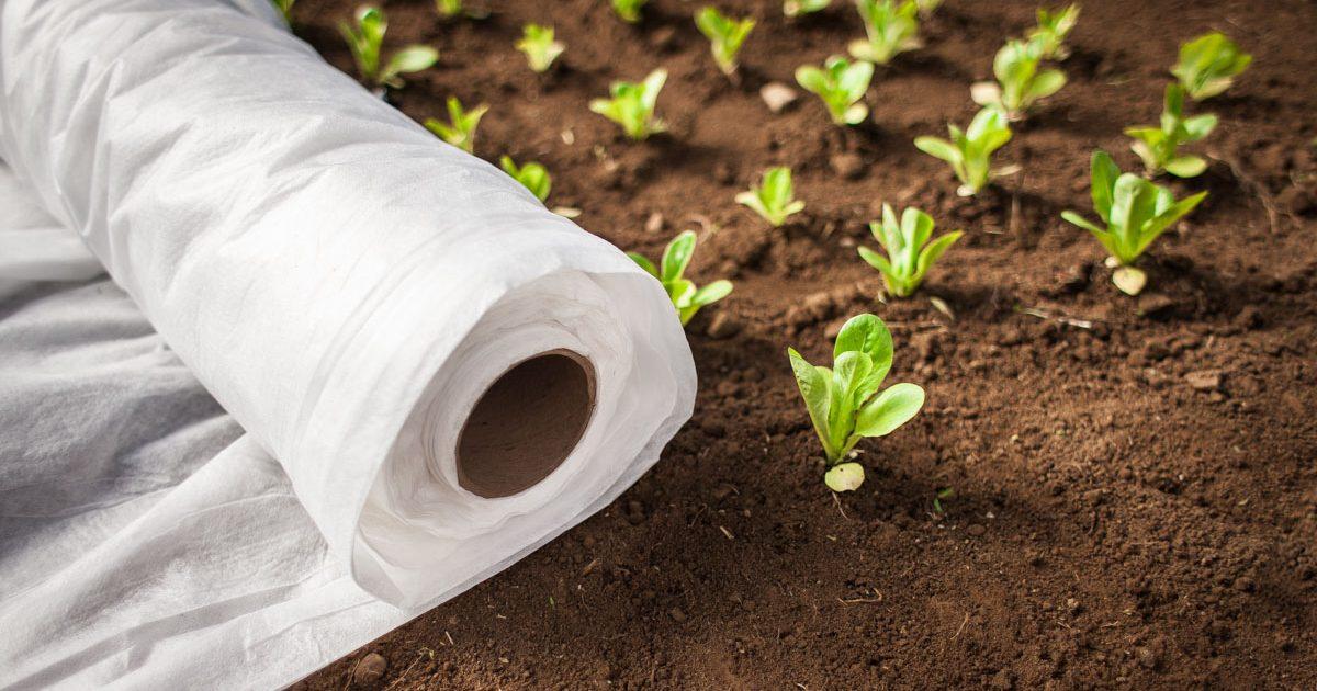 Об огурцах под укрывным материалом: посадка и выращивание под спанбондом