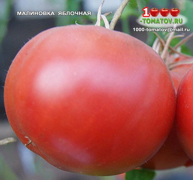 Томат малиновка - описание сорта, характеристика, урожайность, отзывы, фото