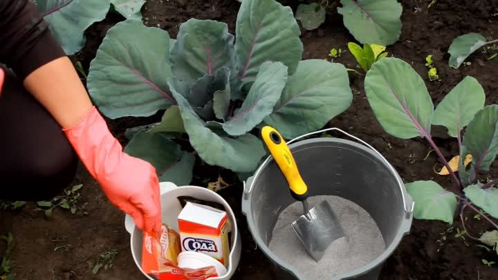 Борьба с гусеницами содой: рекомендации по обработке капусты