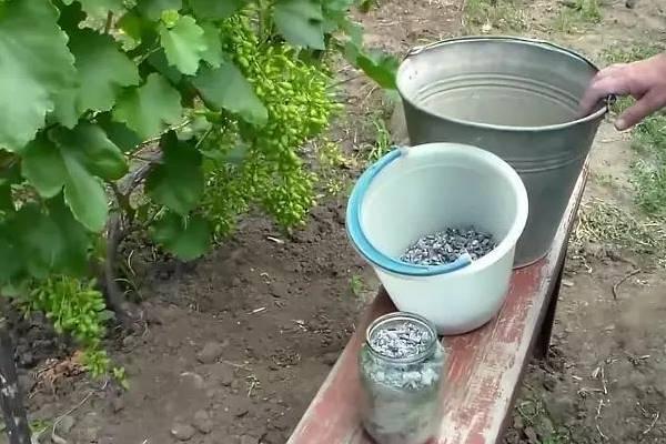 Как использовать подкормку для свеклы и удобрения, как поливать и сажать