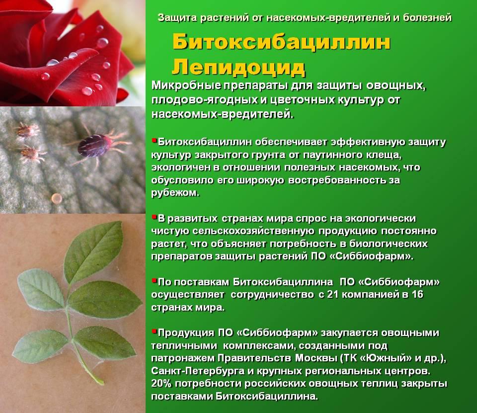 Болезни физалиса: почему желтеют листья, вредители и их лечение с фото