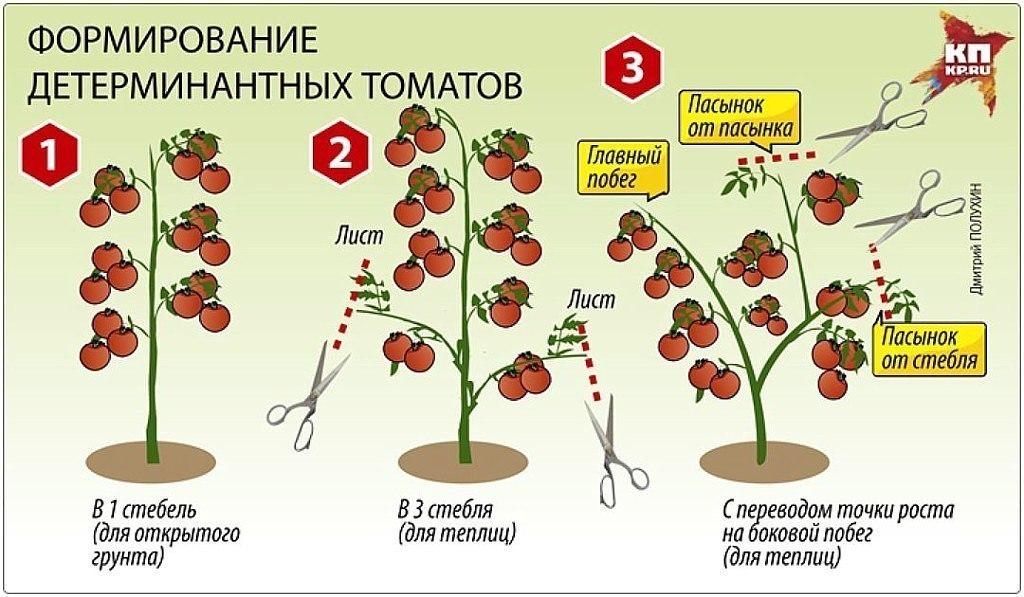 Штамбовые помидоры: что это такое, лучшие сорта, агротехника