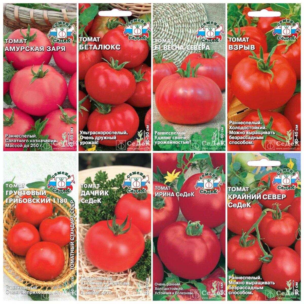 Раннеспелый томат «самара»: описание сорта и фото