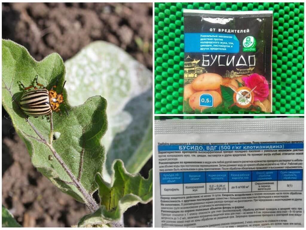 Инсектицид «молния» — универсальное средство для борьбы с вредными насекомыми