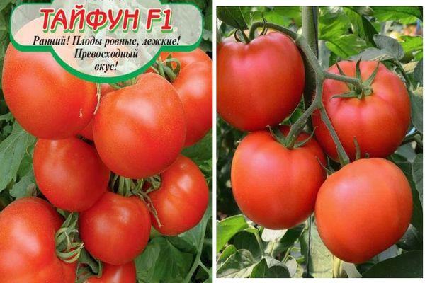 Кистевые томаты   tomatland.ru
