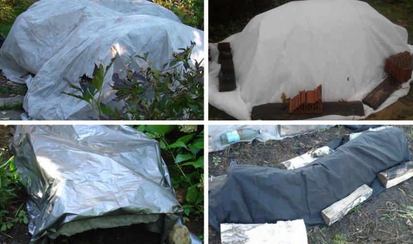 Как укрыть розмарин на даче в открытом грунте на зиму, особенности ухода и нужно ли обрезать