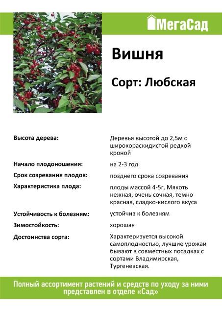 Любская вишня: характеристика и описание сорта, выращивание и уход