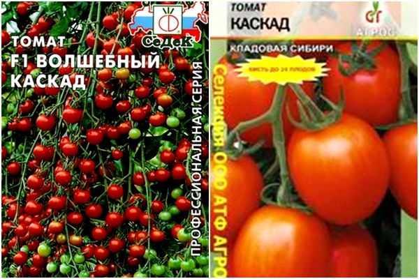 Описание и характеристика мелкоплодных томатов Волшебный Каскад