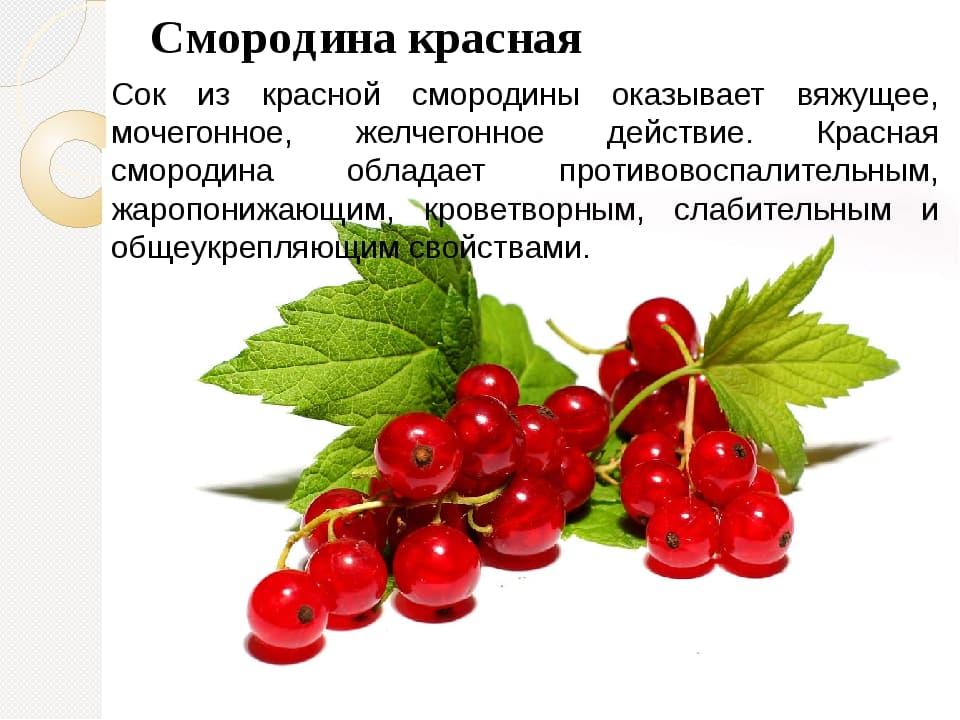 Красная смородина: полезные свойства и противопоказания ягоды, польза и вред для женщин и мужчин