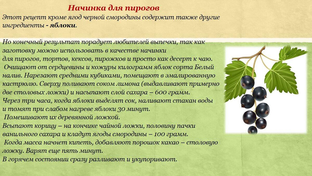 Белая смородина: описание и полезные свойства ягод | food and health