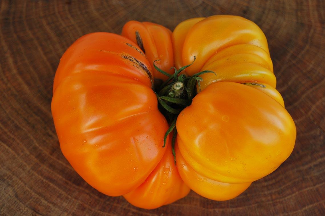 Томат важная персона f1: характеристика и описание сорта от мязиной, фото помидоров, отзывы об урожайности куста
