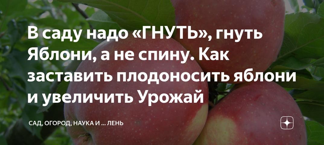 Как заставить яблоню плодоносить ежегодно | домик в деревне