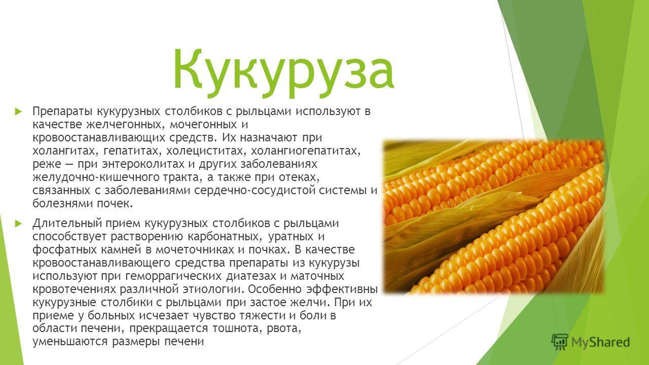 Кукуруза?: полезные свойства и калорийность   food and health