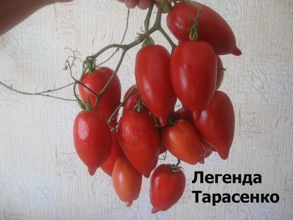 Томат тарасенко юбилейный: характеристика и описание сорта, урожайность с фото