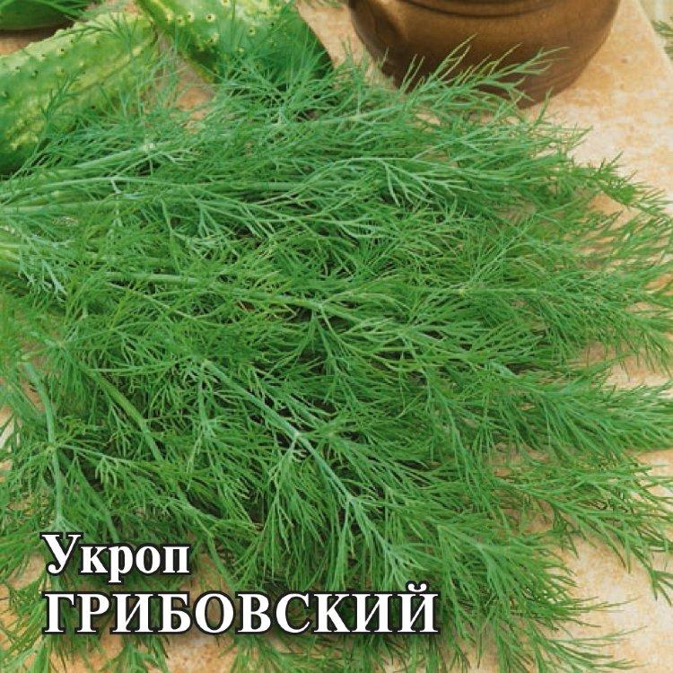 Укроп грибовский описание - сад и огород