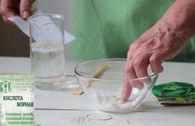 Предпосевная обработка семян: какие препараты могут вам понадобиться для посева семян на рассаду на supersadovnik.ru