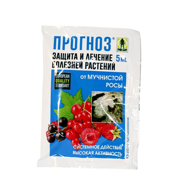 Чем лучше обрабатывать клубнику от болезней, паразитов и инфекций
