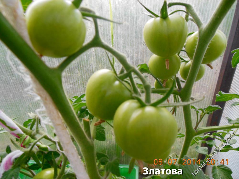 Сладкие крупноплодные томаты: лучшие сорта