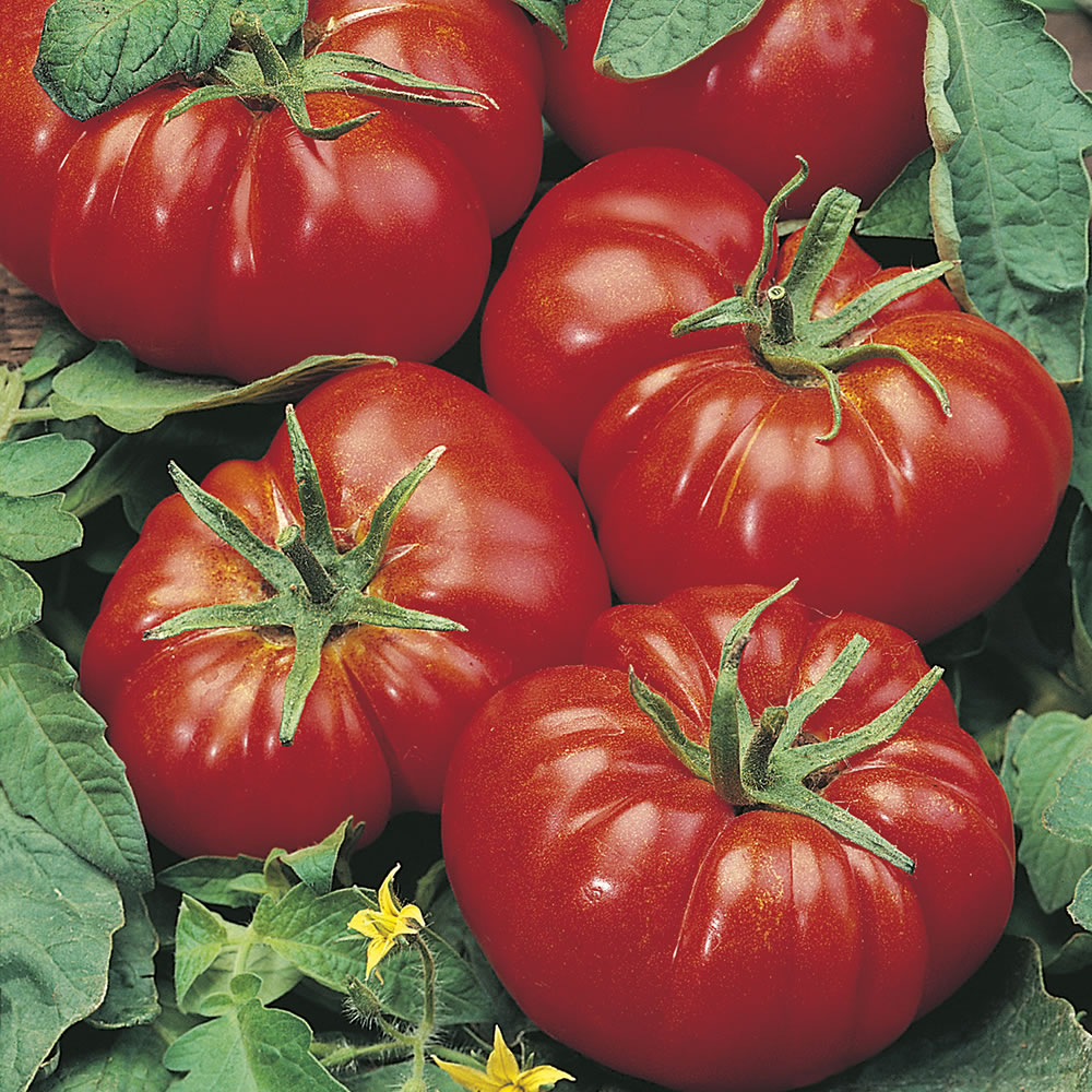 Американский ребристый томат: описание и характеристики сорта, фото и отзывы
