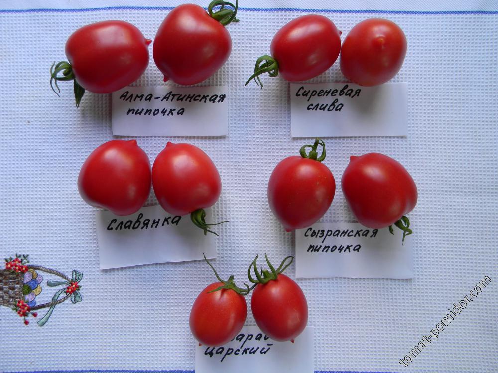 Описание раннего сорта томата скороспелка и его характеристики