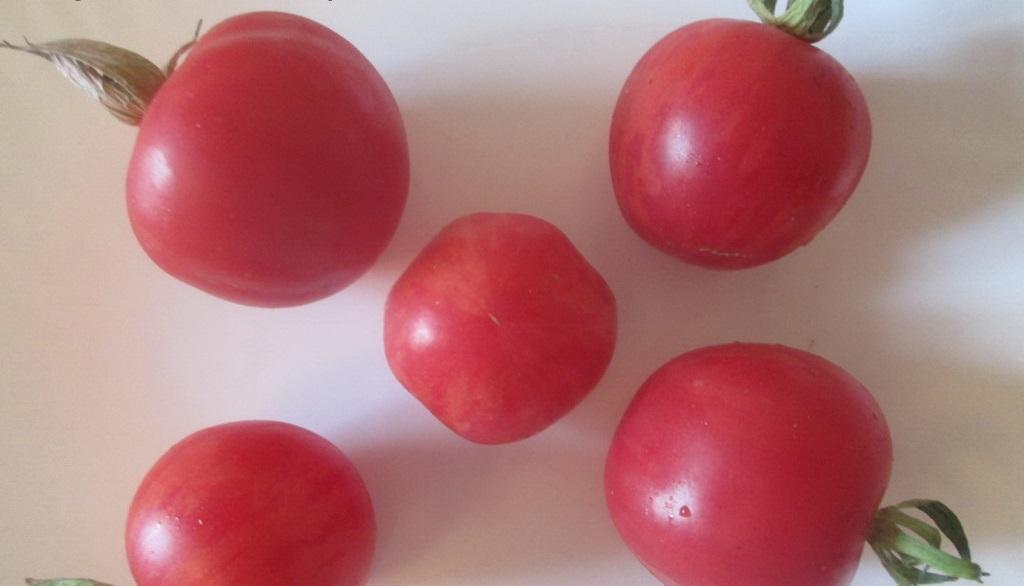 Томат клубничный десерт — описание и характеристика сорта