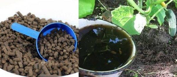 Подкормка огурцов в открытом грунте: схемы и способы   домашняя ферма