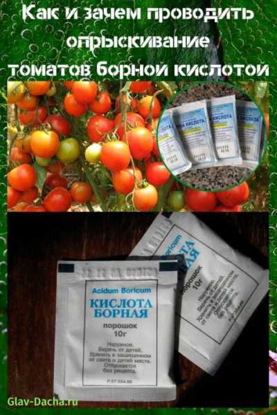 Правильная обработка помидор борной кислотой преобразит ваши растения!