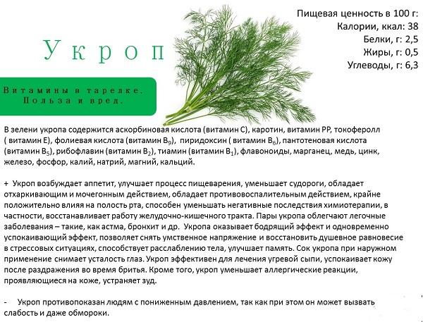 Как заваривать семена укропа, от чего помогает настой, каковы его польза и вред, а также как правильно пить, долго ли принимать это средство? русский фермер