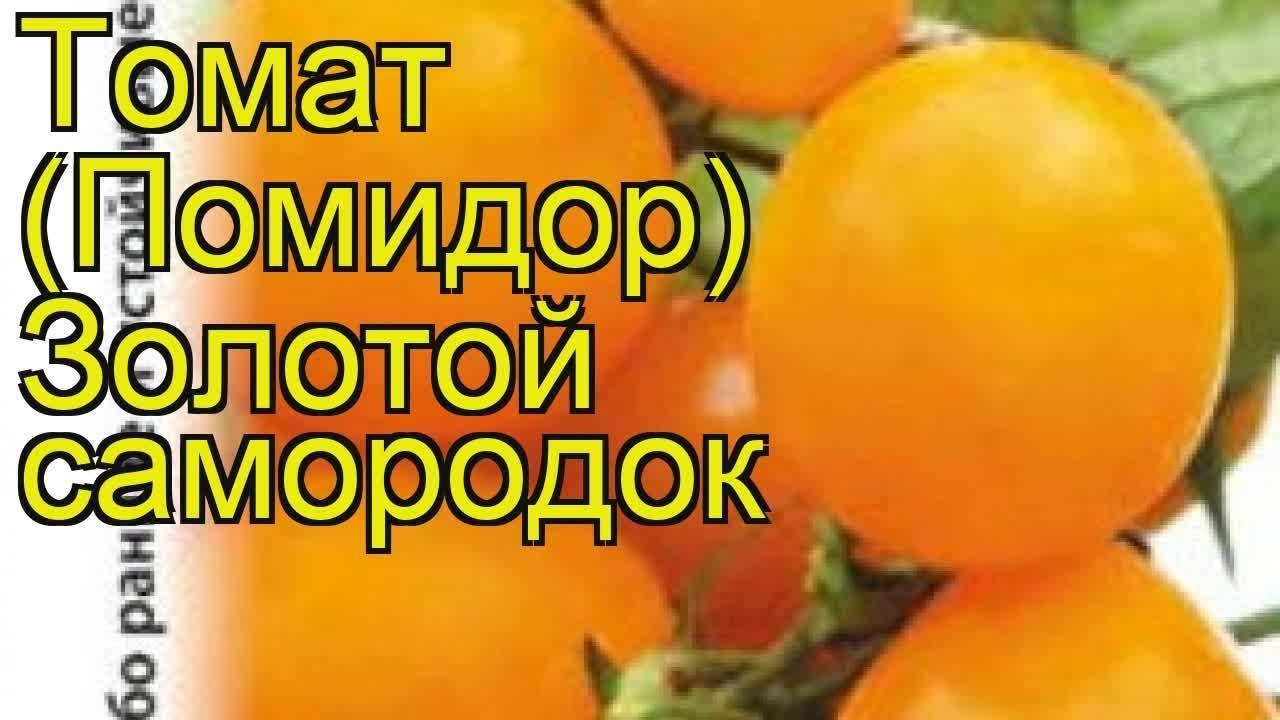"""Томат """"золотой поток"""": описание сорта и фото, устойчивость к заболеваниям и рекомендации по уходу русский фермер"""