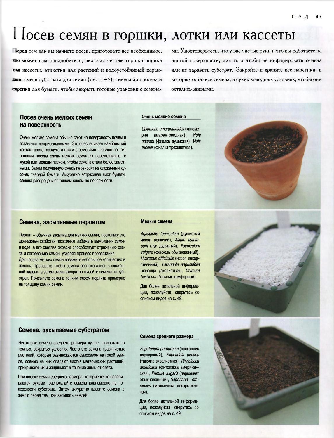 Что такое стратификация семян: виды и способы проведения