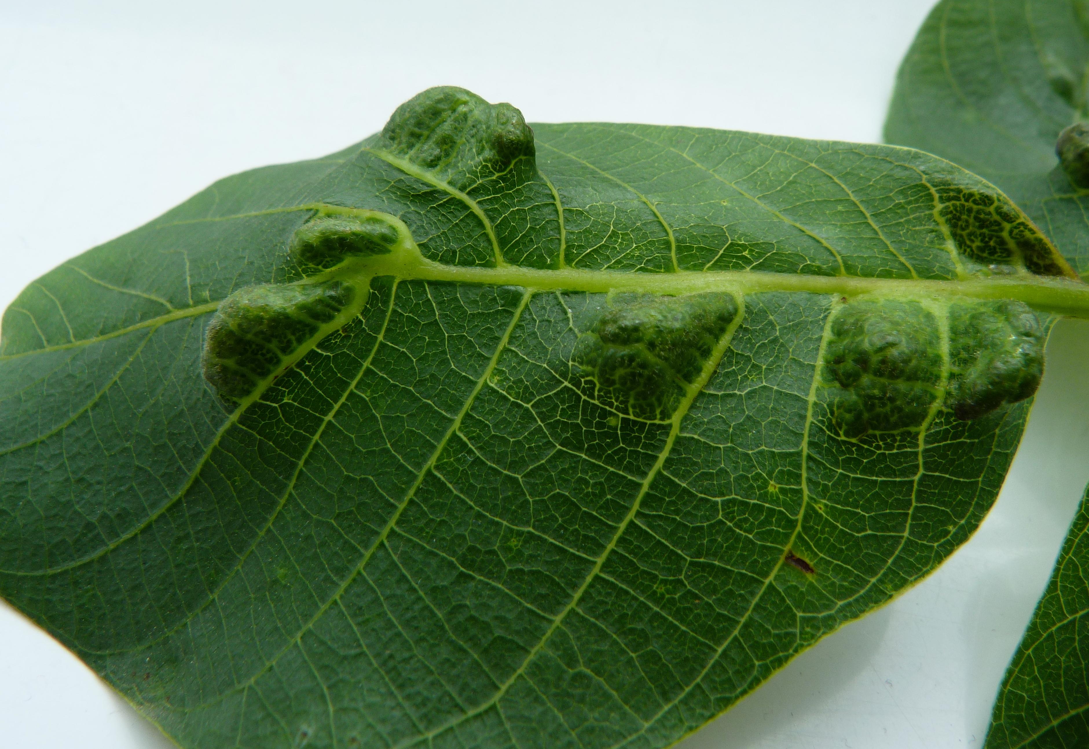 Лечение полипа эндометрия народными средствами | компетентно о здоровье на ilive