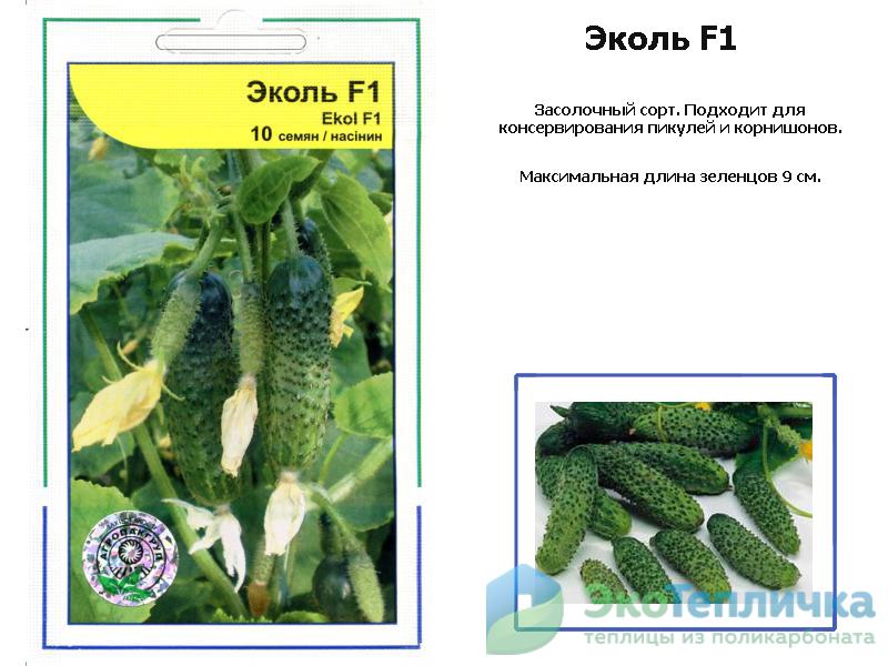 Огурцы эколь f1 – описание сорта с фото, отзывы о семенах и урожае
