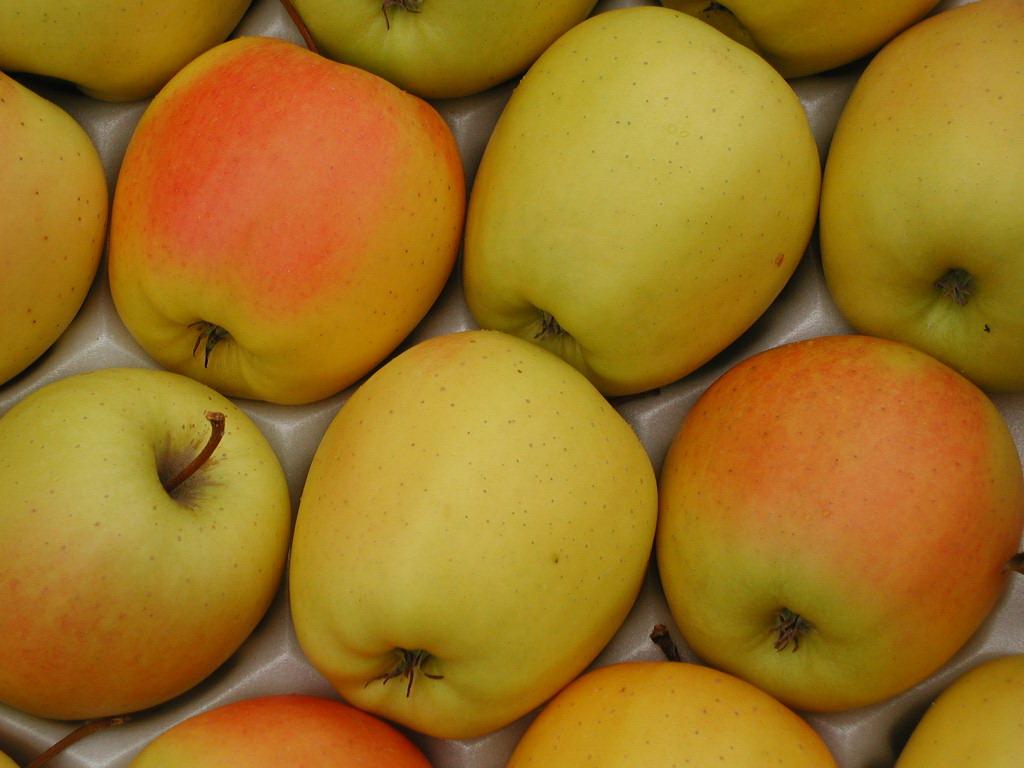 Яблоня «джонаголд»: описание сорта, фото и отзывы