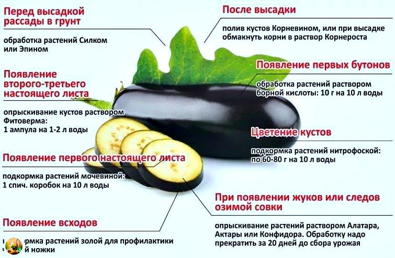 Оптимальная схема подкормок сладкого перца в теплице и открытом грунте