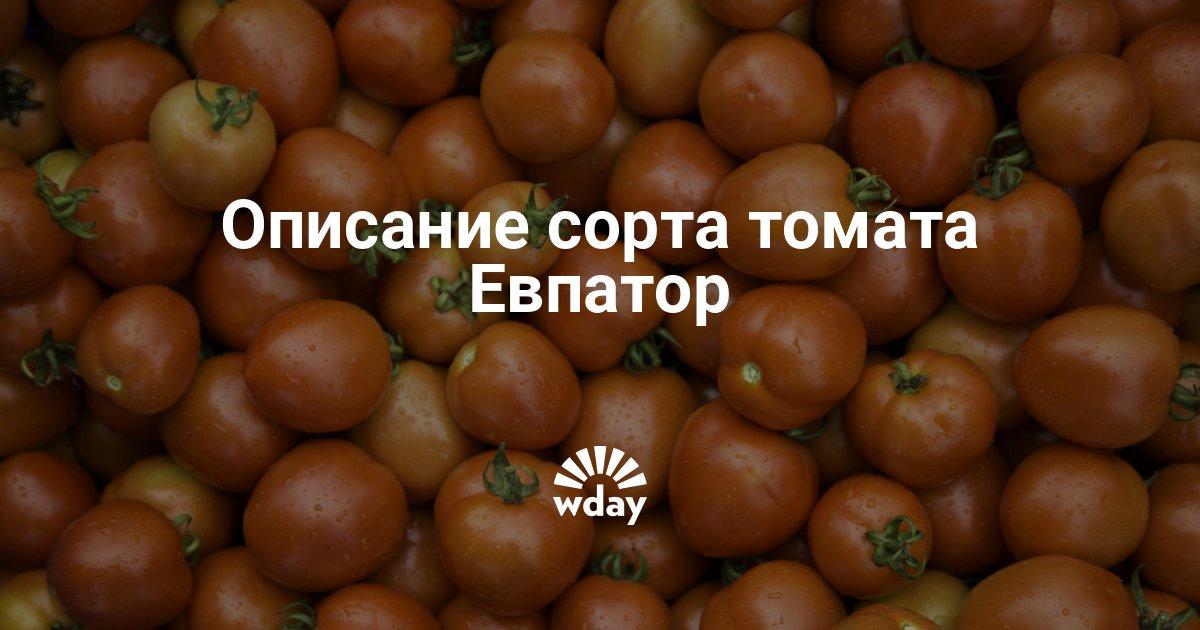 Томат евпатор отзывы фото урожайность. томат евпатор: характеристика и описание сорта