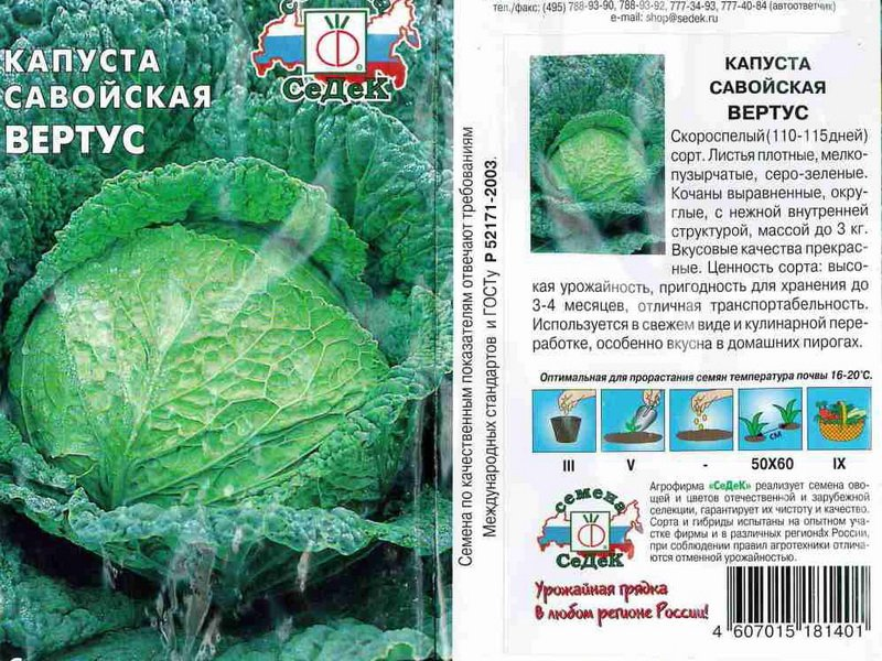 Виды капусты: фото, характеристики, лучшие сорта