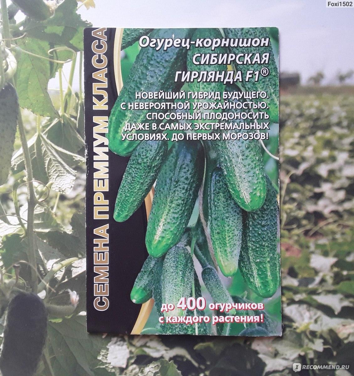 Огурец куманек f1 — описание и характеристика сорта
