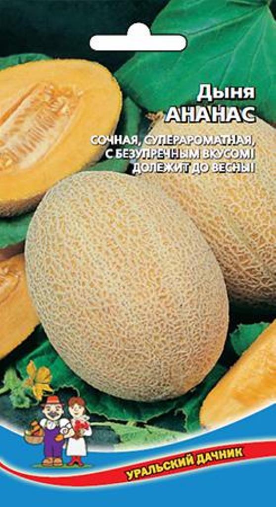 Ананасовая дыня: описание и характеристики сорта, выращивание и уход, отзывы