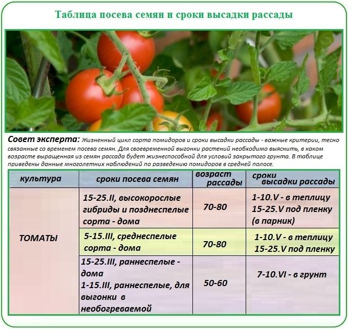 Как вырастить помидоры из семян: как правильно сеять и организовать высадку своих томатов и уход за ними? русский фермер