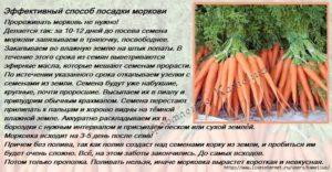 Посадка и уход за морковью в открытом грунте