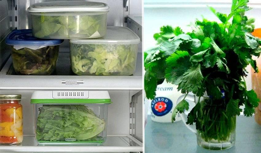Как сохранить укроп свежим в холодильнике, чтобы использовать долгое время зимой: можно ли это делать без заморозки, какие еще есть способы заготовки травы? русский фермер