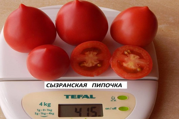 Томат сызранская пипочка: описание сорта, отзывы, фото, характеристика | tomatland.ru