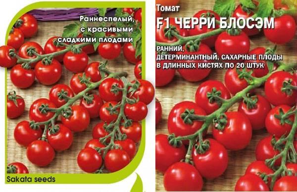 Описание сорта томата черри желтый, особенности выращивания и ухода – дачные дела