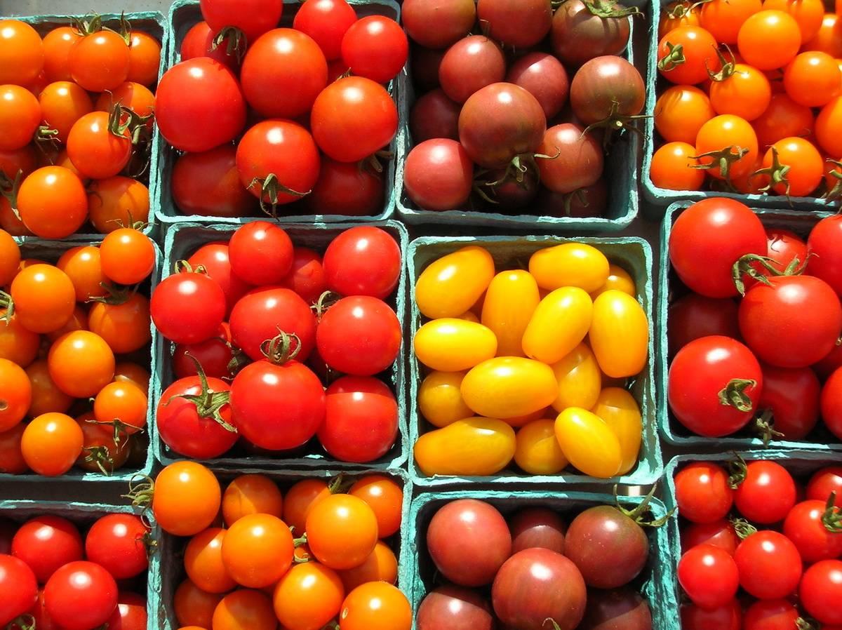 Крупноплодный сорт с приятным вкусом — томат «акулина» и поэтапное руководство по его выращиванию