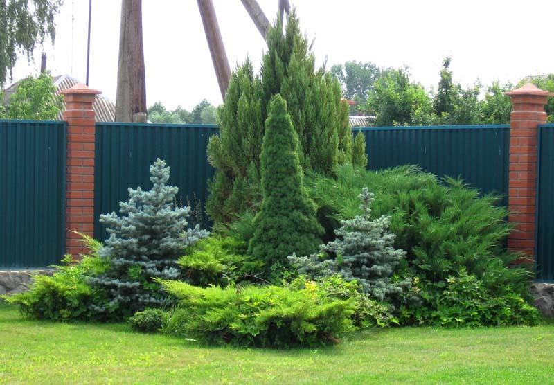 Хвойные растения для сада: 120 фото идей использования вечнозеленых растений