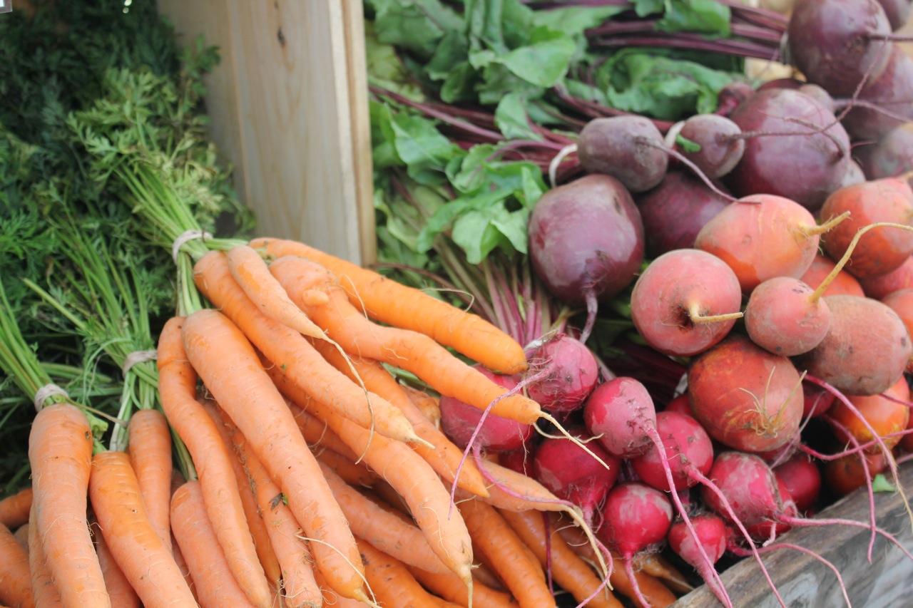 Правила и сроки уборки урожая моркови
