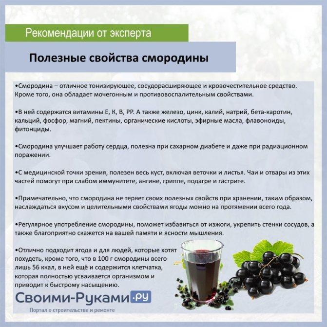 Хранение смородины, черной, красной, срок и способы