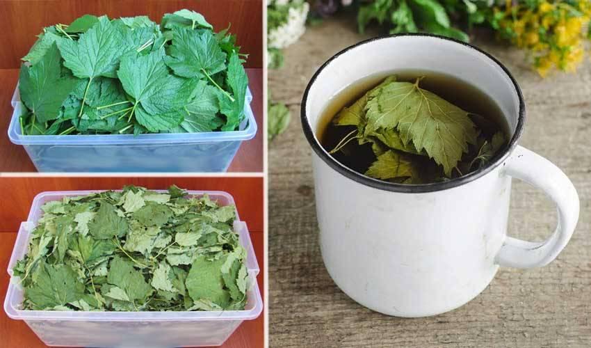 Полезный – не полезный. какие лекарственные травы можно собирать самим?   здоровье: медицина   здоровье   аиф тюмень